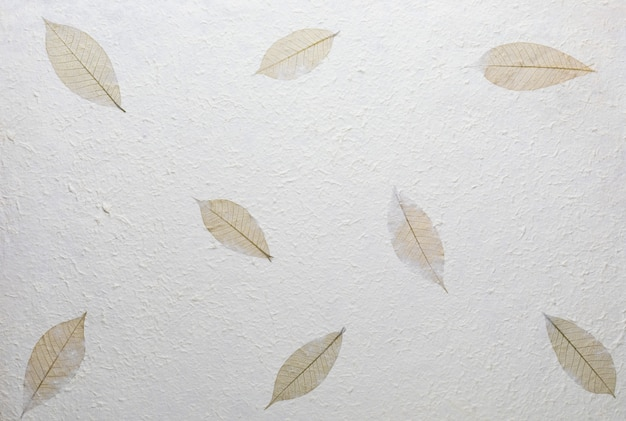 Texture di carta fatta a mano con materiali riciclati, foglie d'albero e fibre di cotone.