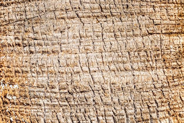 Texture di corteccia d'albero. disegno insolito, sfondo. spazio per il testo.