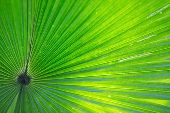 Texture di foglia di palma verde