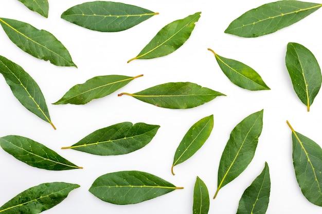 Texture di foglie di alloro fresche e secche.