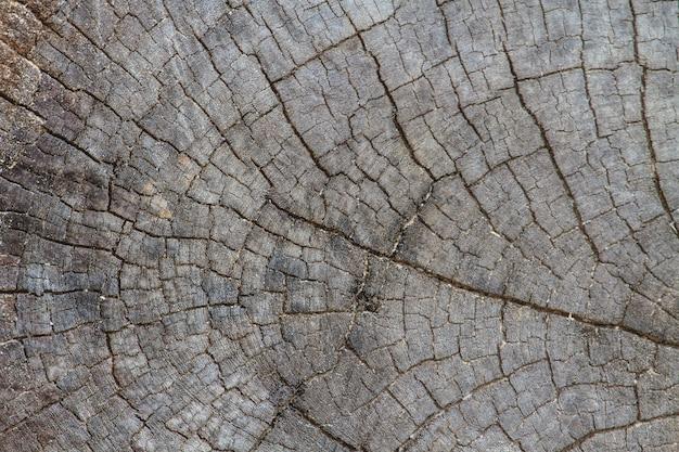Texture di legno di corteccia