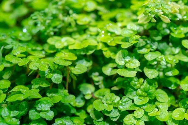 Texture di piante verdi.