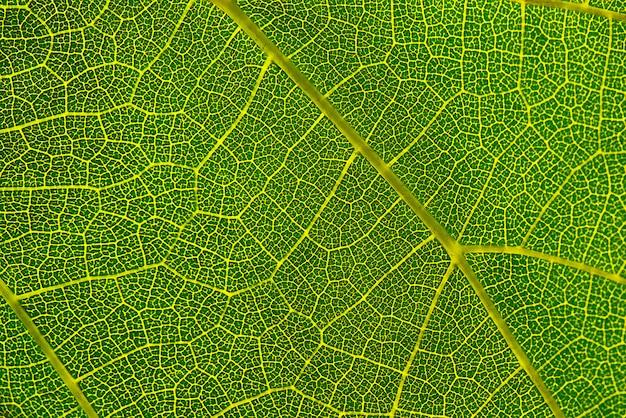 Texture di sfondo della foglia verde macro fotografia di foglia verde