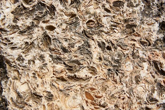 Texture di sfondo di pietra naturale con conchiglie di animali marini.