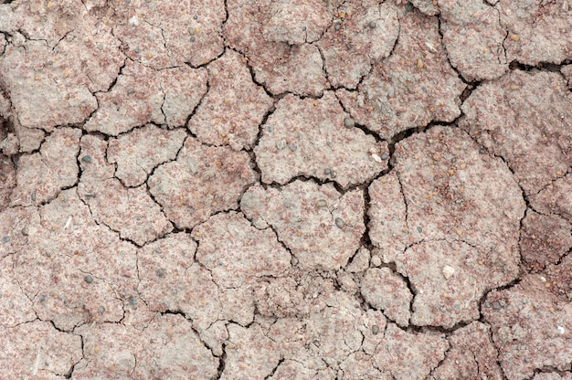 Texture di terra screpolata