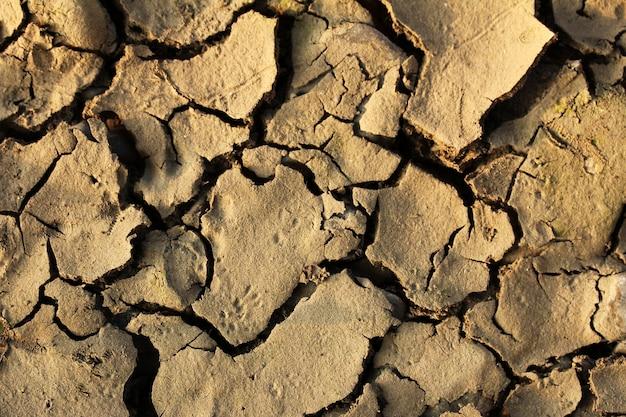 Texture di terra secca incrinata