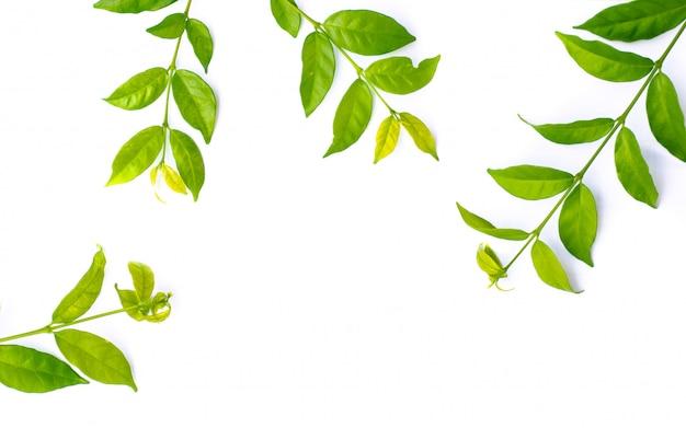 Texture foglia verde. priorità bassa di struttura del foglio
