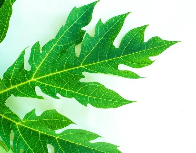Texture foglia verde. texture foglia