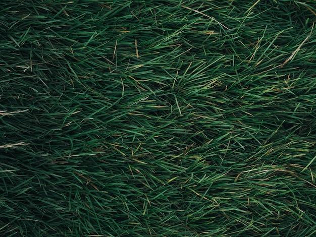 Texture foglia verde