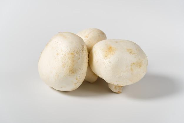 Tiro a macroistruzione dei funghi freschi del fungo prataiolo. champignon bianco close-up.