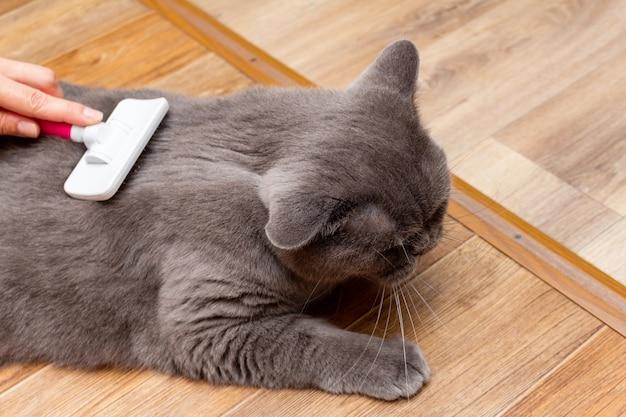 Toelettatura spazzolatura gatto grigio piuttosto carino