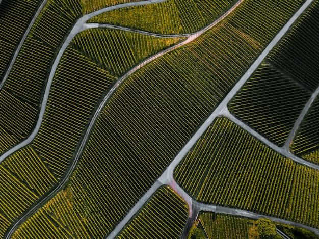 Top-down vista aerea di un verde vigneto estivo al tramonto