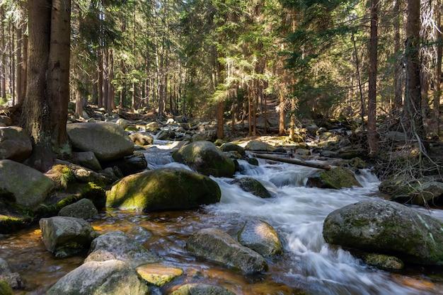 Torrente montano roccioso e alberi di gomma