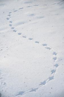 Tracce di un uccello nella neve in primo piano