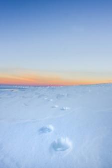Tracce di una volpe che si allontana in lontananza contro il cielo dell'alba