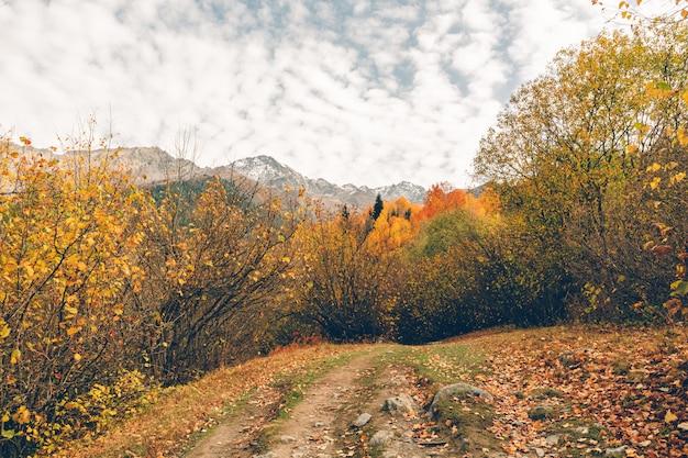 Traccia di escursione variopinta della natura della foresta e dell'albero senza nessuna persona.