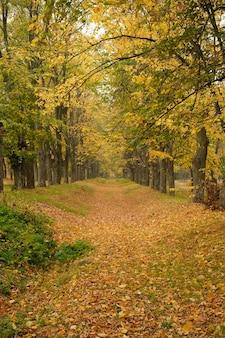 Traccia nella foresta di autunno, strada di autunno