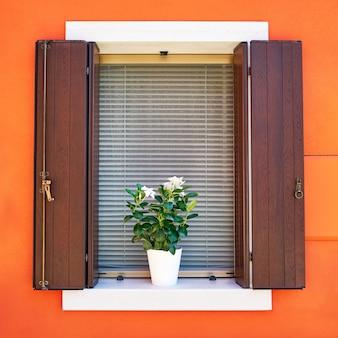 Tradizionali pareti colorate e finestre con persiane aperte e fiori nel vaso.