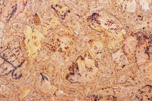 Trama di albero di sughero. sfondo, vuoto per design_