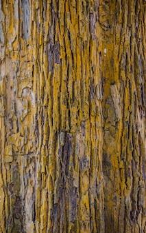 Trama di corteccia d'albero