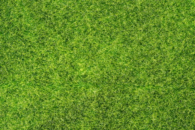 Trama di erba