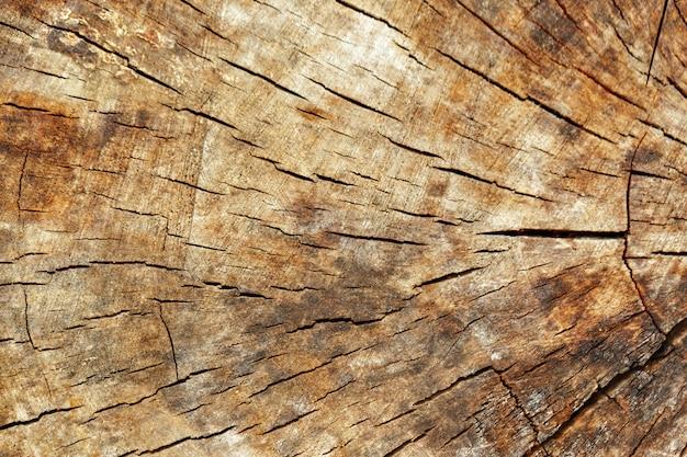 Trama di taglio in legno, anelli degli alberi