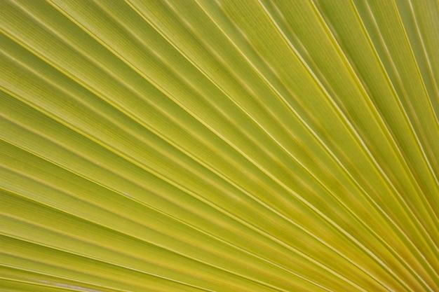 Trama foglia di palma