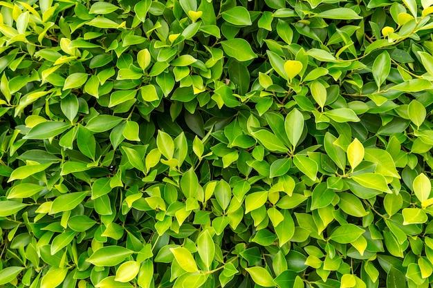 Trama verde cespuglio