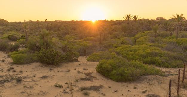 Tramonto a dune con palme, sabbia e vegetazione