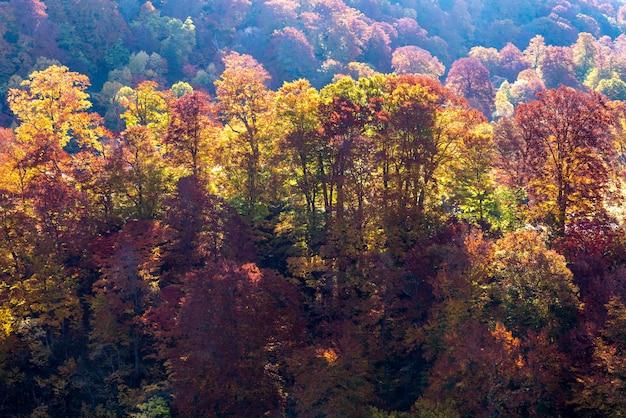 Tramonto foresta autunno akita giappone