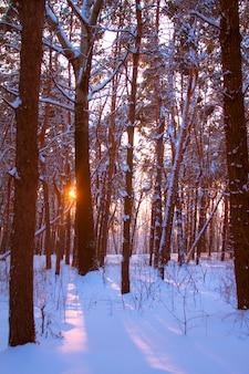 Tramonto in una foresta nevosa e i raggi del sole attraverso i rami degli alberi.
