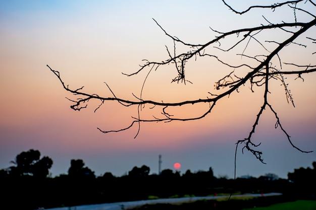 Tramonto la luce della sera attraverso le nuvole e gli alberi.