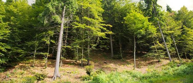 Tranquillo paesaggio boschivo alpino