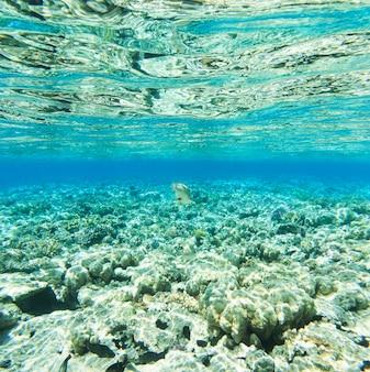Tranquillo sott'acqua