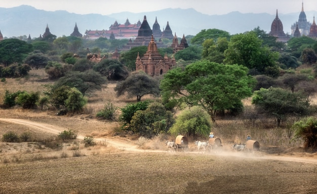 Trasporto rurale birmano con due buoi bianchi che tirano un carrello di legno