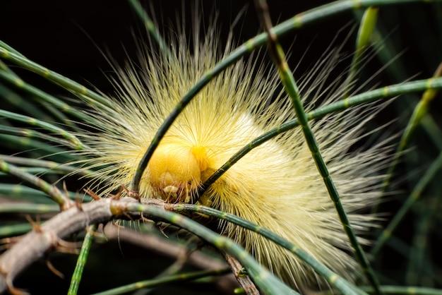 Trattore a cingoli peloso giallo che si arrampica sul ramo