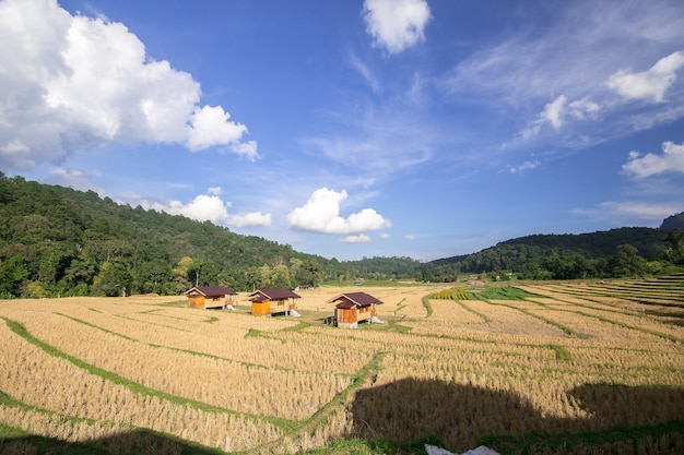 Tre cottage in mezzo alle risaie