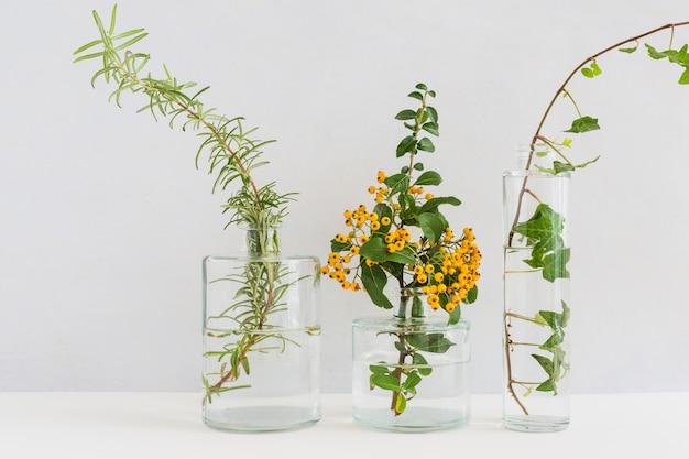 Tre diversi tipi di ramoscelli nel vaso di vetro su sfondo bianco