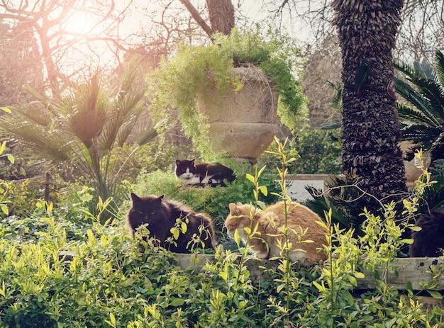 Tre gatti senzatetto che vivono nel parco pubblico