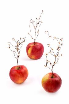 Tre mele rosse mature con una pianta come un albero