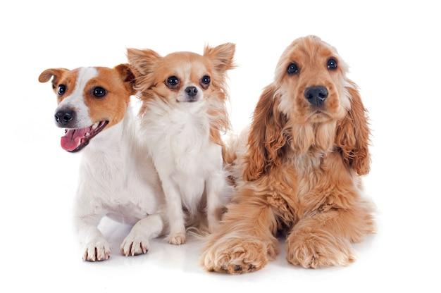 Tre piccoli cani