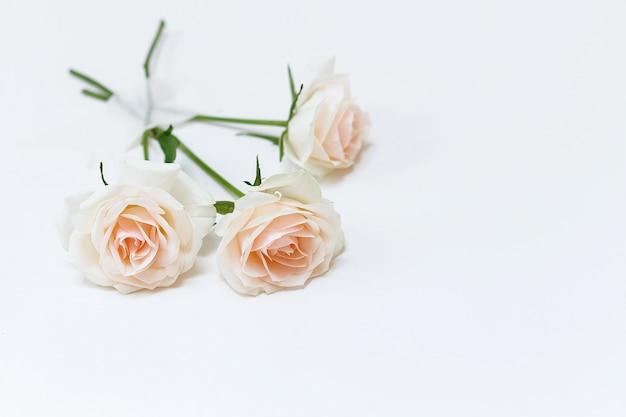 Tre rose attaccate al muro bianco con nastro adesivo. fiori concept creativo.