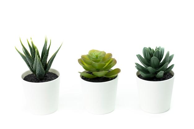 Tre vasi bianchi succulente aloe dyckia, echeveria isolato su superficie bianca, cosmetici aloe