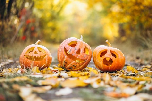 Tre zucche sveglie di halloween nel parco di autunno