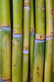 Tronchi di bambù verde zucchero cibo di canna