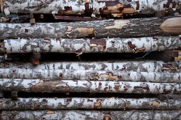 Tronchi di legno di betulla