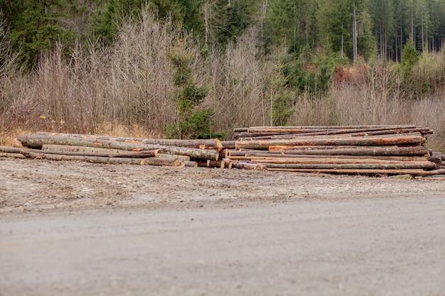 Tronchi di legno di pinete nella foresta, accatastati in un mucchio. tronchi d'albero appena tritati accatastati uno sopra l'altro in un mucchio.