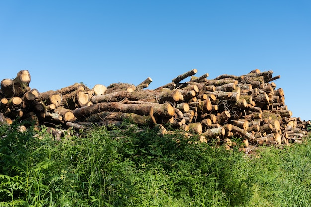 Tronchi di legno di quercia, accatastati in un mucchio per legna da ardere.