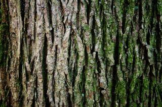 Tronco, albero, natura, composizione