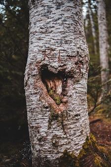 Tronco d'albero marrone con muschio verde